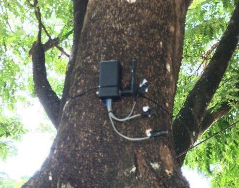 arvoreinteligente 493x388 - Pesquisador da UFPB cria árvore inteligente capaz de evitar incêndios florestais