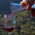 img 0577 - Problemas climáticos podem derrubar produção de vinho na França