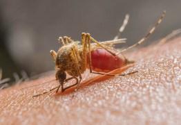 Confirmado 14° caso de malária na Paraíba