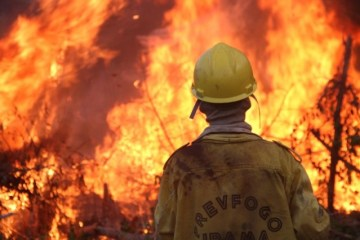 XINGU1 - DIA DO FOGO: Ibama foi alertado três dias antes das queimadas na Amazônia, mas aviso foi ignorado