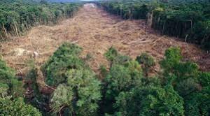 download 10 300x166 - Sudeste será região mais afetada por desmate da Amazônia, diz líder do IPCC
