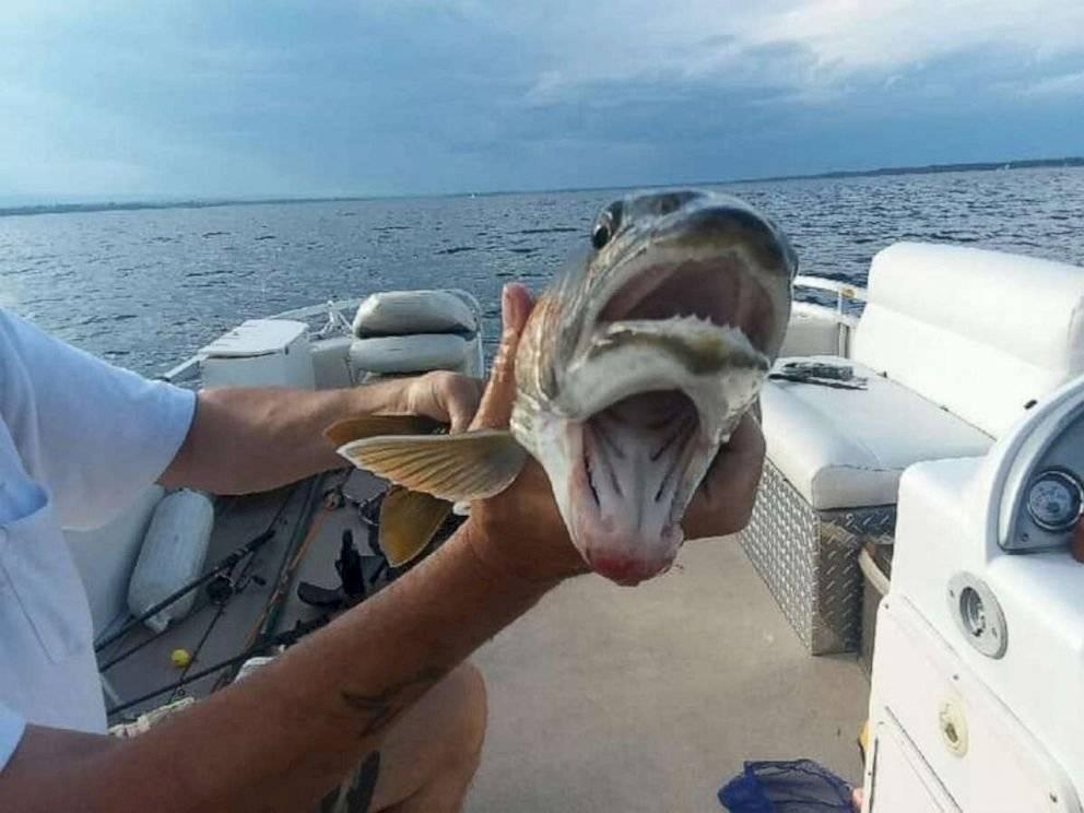 fish01asht190821 464a35183e363f483402b0d50d90c461 1200x0 - Mulher se surpreende ao pegar peixe de duas bocas em lago