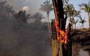 quatro estados pedem ajuda das forcas armadas para combate a incendi 19824142654 300x187 - Quatro estados pedem ajuda das Forças Armadas para combate a incêndios; saiba quais