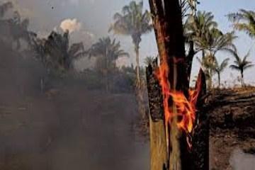quatro estados pedem ajuda das forcas armadas para combate a incendi 19824142654 - Quatro estados pedem ajuda das Forças Armadas para combate a incêndios; saiba quais