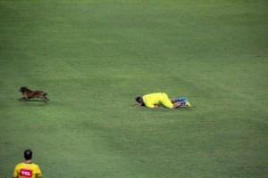 whatsapp image 2019 08 25 at 20.42.49 300x200 - Cachorro invade o campo, rouba a cena e deixa até gandula no chão em jogo do Campeonato Brasileiro; VEJA VÍDEO