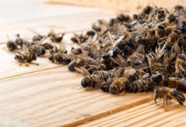 Agrotóxico Fipronil mata 50 milhões de abelhas em Santa Catarina