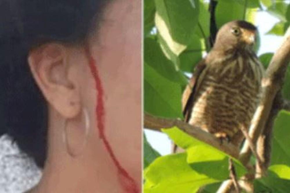 gaviao - NINHO DE GAVIÃO: Vídeo mostra ataque de ave que 'persegue' moradora há um mês - ASSISTA
