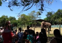 PMJP e MPF fecham acordo e Lady será transferida para o Santuário dos Elefantes