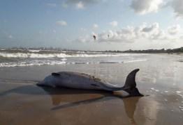 Cena triste: Golfinho é encontrado morto em praia de Cabedelo