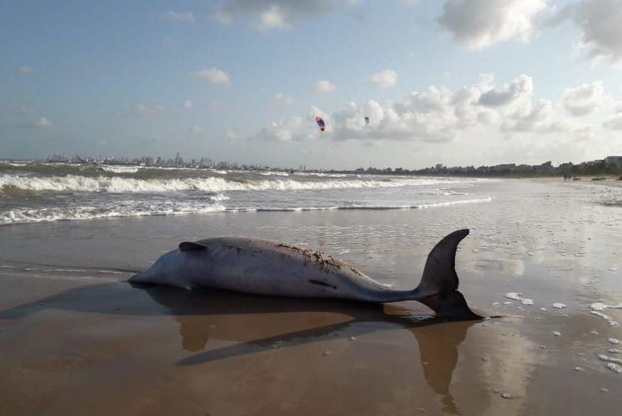 boto - Cena triste: Golfinho é encontrado morto em praia de Cabedelo