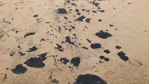 naom 5d8cddc8b04b1 300x169 - PF apura possível crime ambiental em litoral brasileiro