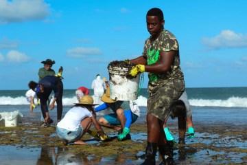 naom 5dad745c5b0d3 - Voluntários usam materiais de jardinagem para recolher óleo
