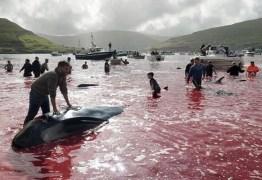 BANHO DE SANGUE: mais de 100 baleias são massacradas em ritual – IMAGENS FORTES