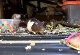Mulher que vivia com 320 ratos em carro é obrigada a entregar os roedores; VEJA VÍDEO