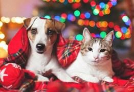 Veterinário faz alerta a donos de pets sobre perigos de decorações de natal