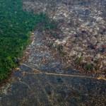 desmatamento - Amazônia perde 9.700 quilômetros quadrados em um ano, maior desmatamento da década
