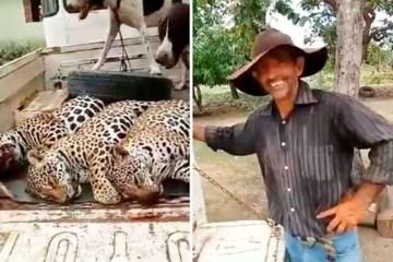 onças - MÃE E DOIS FILHOTES ABATIDOS: Polícia identifica fazenda onde onças-pintadas foram mortas