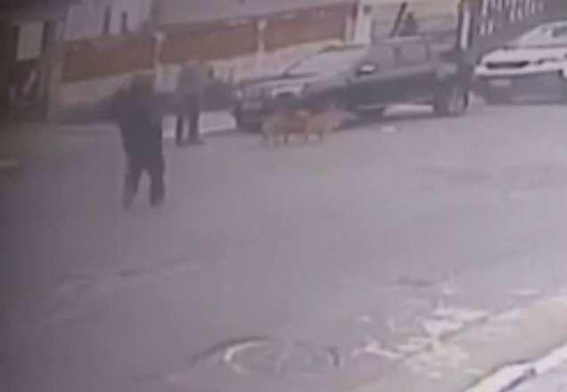 133561 - Empresário é executado a tiros durante passeio com cachorro - VEJA VÍDEO