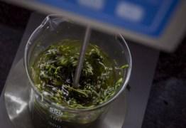 FINS MEDICINAIS: Anvisa aprova venda de produtos à base de Cannabis em farmácias