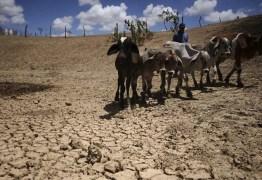 Pesquisador prevê uma década sem seca rigorosa no Sertão