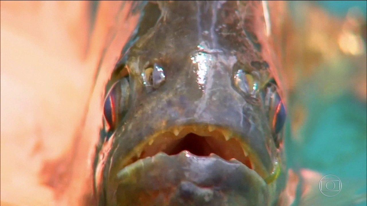 8208632 x720 - PERIGO: banhistas são mordidos por piranhas em rio