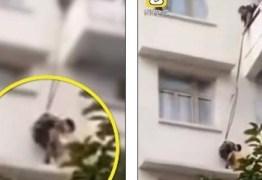Avó pendura neto a cerca de 15 metros de altura para salvar gato