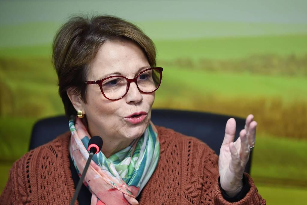 "tereza cristina - Ministra terá que esclarecer pecuária no Pantanal e ""boi bombeiro"" no Senado"