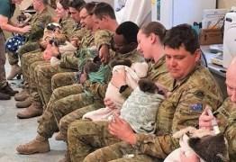 Soldados australianos usam hora de descanso para amamentar coalas