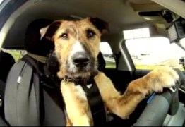 Polícia persegue homem após acidente e descobre que cadela estava no volante