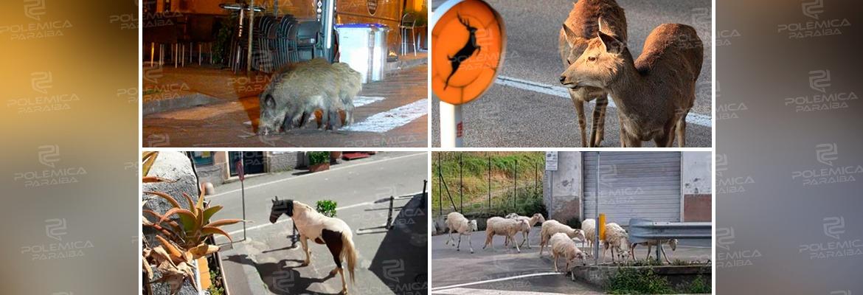 ec5a4a9e aa3e 41cc b016 a94157f5f73d - Animais invadem ruas de cidades que ficaram vazias por conta do coronavírus - VEJA VÍDEO