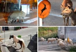 Animais invadem ruas de cidades que ficaram vazias por conta do coronavírus – VEJA VÍDEO