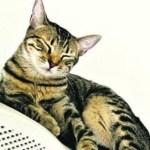 dgw4h7n9l5xrl2y83w0oxqiyi - Gato testa positivo para COVID-19 após dona ser diagnosticada com a doença