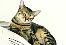 Gato testa positivo para COVID-19 após dona ser diagnosticada com a doença
