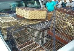 Polícia apreende armas de caçadores e aves na região de Campina Grande