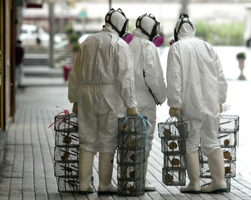 4557 61F881607168D352 1024x816 - Ratos estão infectando humanos com hepatite e ninguém sabe como, aponta estudo
