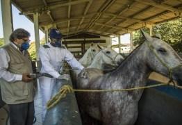 Soro produzido com anticorpos de cavalos pode ajudar a combater Covid-19