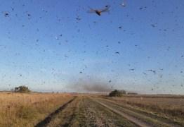 Nuvem de gafanhotos chega à Argentina e se aproxima do Brasil – VEJA VÍDEO
