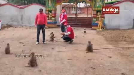 xblog monkeys 2.jpg.pagespeed.ic .8colV4RJwg - Macacos surpreendem por 'distanciamento social' na Índia