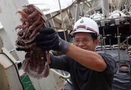 Cientistas encontram 'barata gigante' que vive no fundo do mar