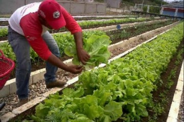 venezuela47496 - A hipócrita esquerda latino-americana e a agricultura venezuelana - Por Werner Gutiérrez