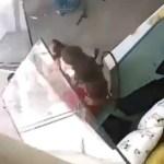 Capturar 20 - Vídeo mostra momento em que apartamento é atingido por reflexo de explosão em Beirute - CONFIRA