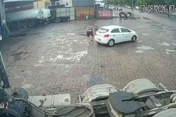 acidente - Lutador de Jiu-Jistu é atingido por carro no acostamento, escapa ileso e sai comemorando