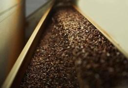NEVE DE CACAU: fenômeno foi causado por um falha em fábrica de chocolate