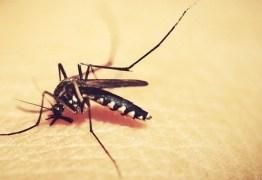 Paraíba identifica dois sorotipos de dengue em circulação no Estado