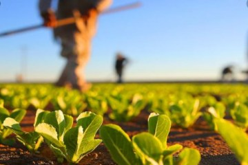 Ações do PB Rural Sustentável garantem a preservação do meio ambiente