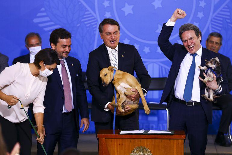 Presidente de ONG destaca empenho de Michelle Bolsonaro em aprovação de lei contra maus-tratos a cães e gatos