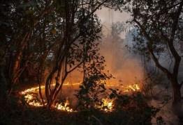 Campanha reúne voluntários para salvar animais no Pantanal