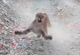 Homem grava momento em que é perseguido por puma em trilha; VEJA VÍDEO
