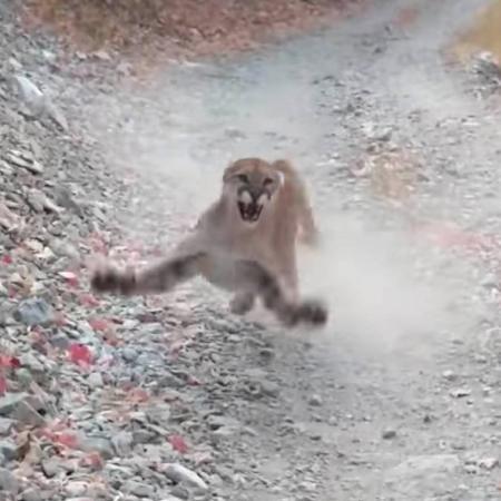 eua homem grava momento em que e perseguido por puma em trilha veja 1602627530899 v2 450x450 - Homem grava momento em que é perseguido por puma em trilha; VEJA VÍDEO