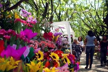 flores dia de finados - Dia de Finados: preço de flores chega até R$ 500 em floriculturas de João Pessoa